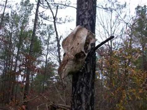 INCREDIBLE Bigfoot Howl Caught on Tape (Old Skull