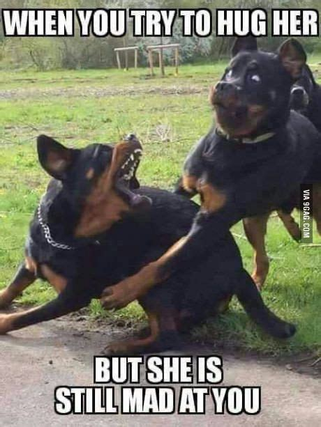 Top 24 Funny Couple Memes | QuotesHumor