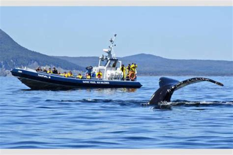 Whale-Watching Cruise in Forillon National Park – Boat