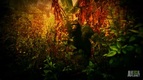 Tales of a Very Vocal Bigfoot in Indonesia | Finding