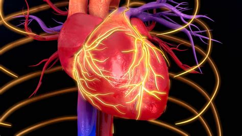 Anatomy Of Human Heart - Medical X-Ray Scan Stock Footage