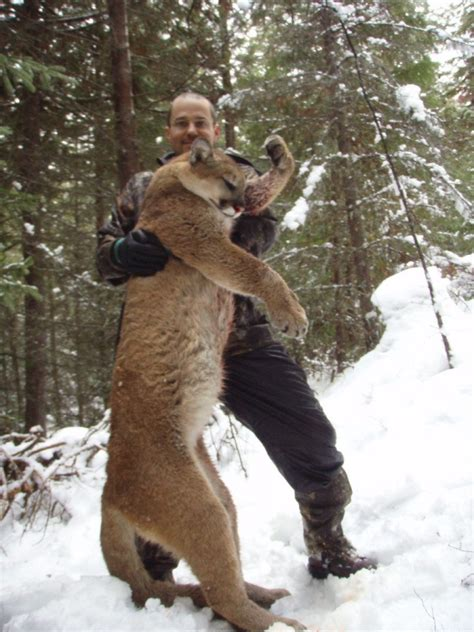 Cougar Gallery – Whiteswan Lake Outfitters | British
